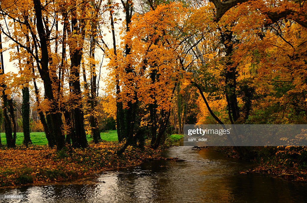 creek and yellow forest : Stock Photo