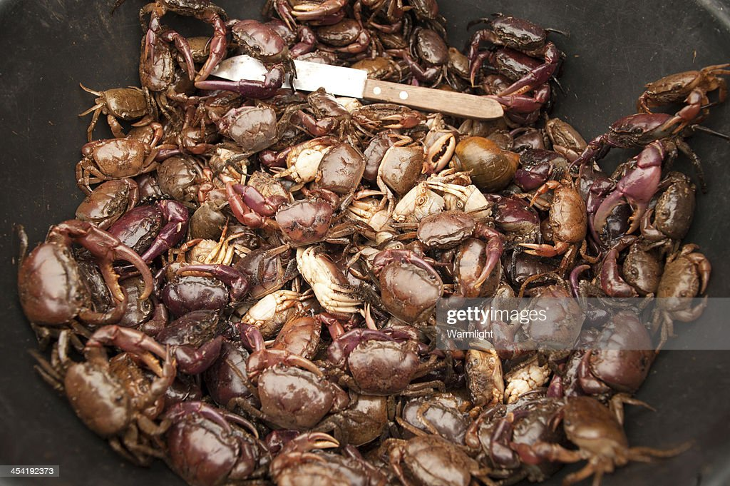 creek crab : Stock Photo