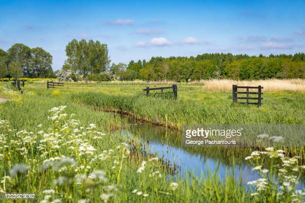 creek crossing a grass area on a summer day - netherlands stock pictures, royalty-free photos & images