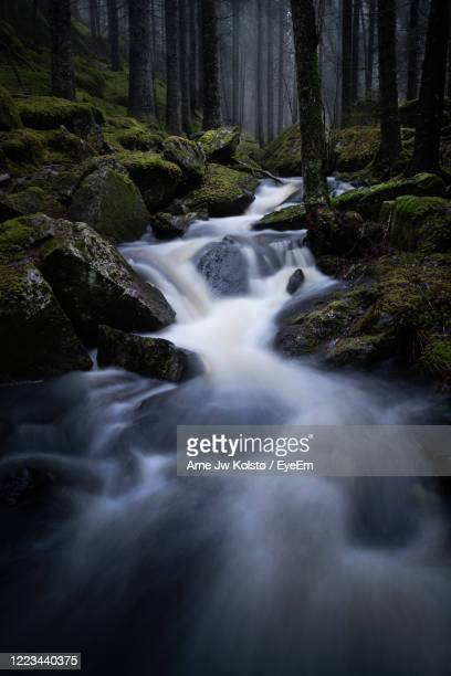 creek flowing between moss-grown rocks through a moody forest - arne jw kolstø stock pictures, royalty-free photos & images