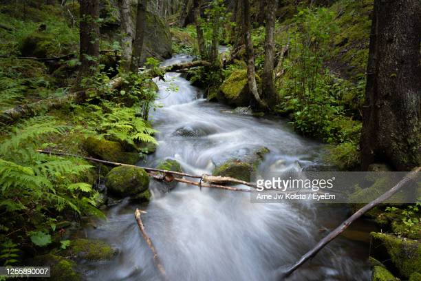 creek flowing in a nordic forest - arne jw kolstø stock pictures, royalty-free photos & images