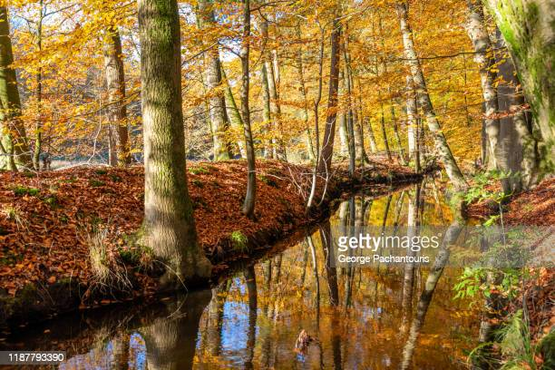 creek in a forest during autumn n gelderland province, the netherlands - gelderland stock pictures, royalty-free photos & images