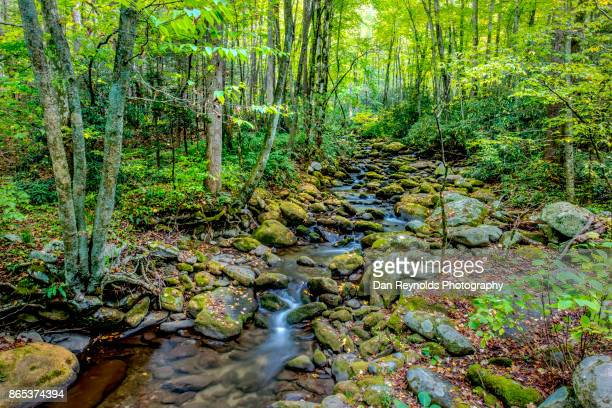 Creek in Great Smokey Mountains National Park,Tennessee,USA