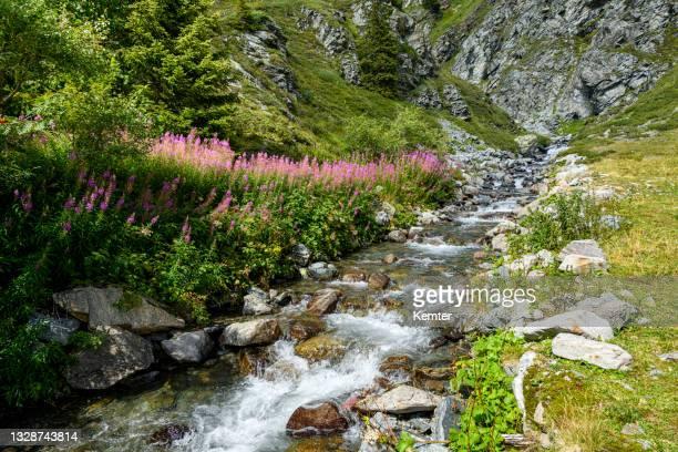 bach in den alpen - kemter stock-fotos und bilder