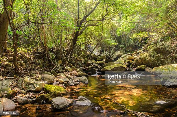creek in the forest - provinz guangdong stock-fotos und bilder
