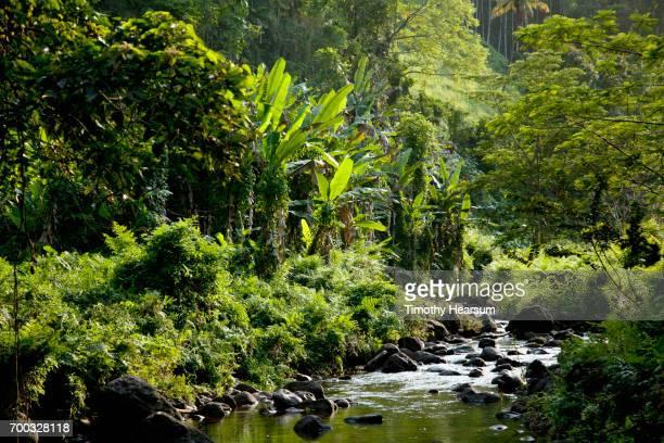a creek runs through a classic tropical landscape - timothy hearsum bildbanksfoton och bilder