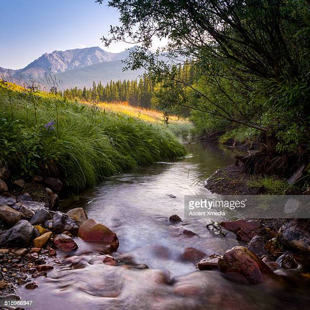 creek rushes below trees, mountain landscape - dramatic landscape stock pictures, royalty-free photos & images