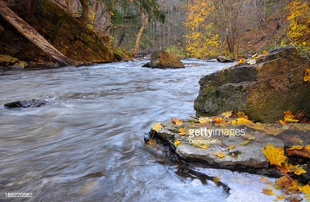 A creek rushes past rocky banks and golden autumn leaves.