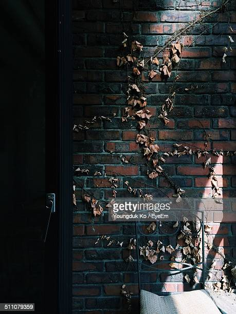 Creeper on the wall of a house
