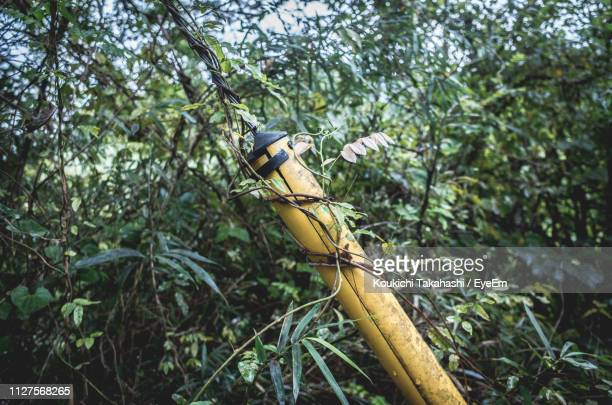 Creeper Plants Growing On Yellow Pole In Forest