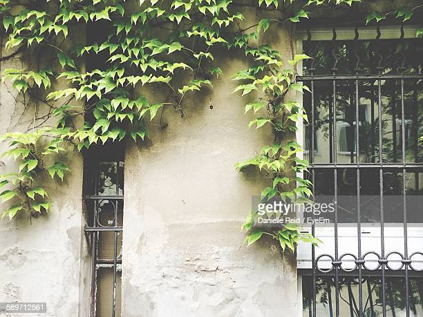 creepers growing on house - danielle reid stock pictures, royalty-free photos & images