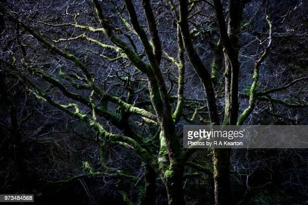 creepy dark tree branches - laubbaum stock-fotos und bilder