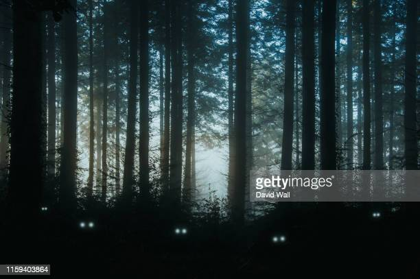 a creepy, fantasy forest of pine trees, back lighted with spooky, glowing eyes of creatures in the undergrowth. - monster fictional character stock pictures, royalty-free photos & images