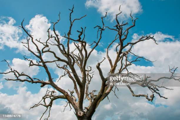 creepy tree - bare tree stock pictures, royalty-free photos & images