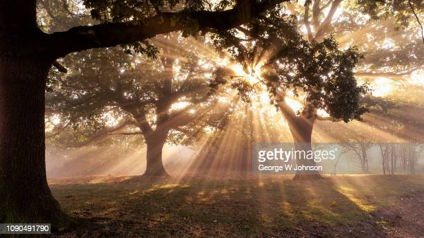 crepusculation - george wood stock pictures, royalty-free photos & images