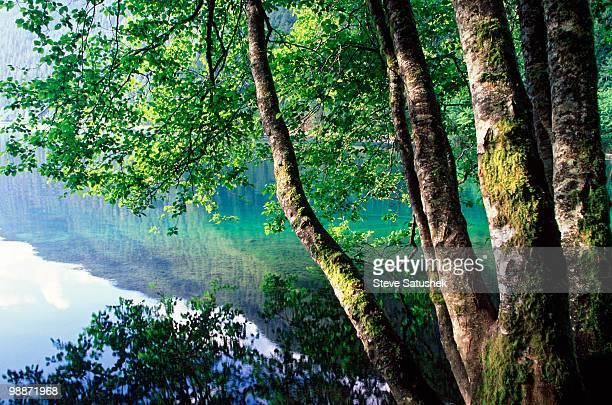 crescent lake - erle stock-fotos und bilder