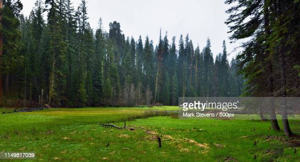 crescent meadows and a giant forest all around - national recreation area stock pictures, royalty-free photos & images