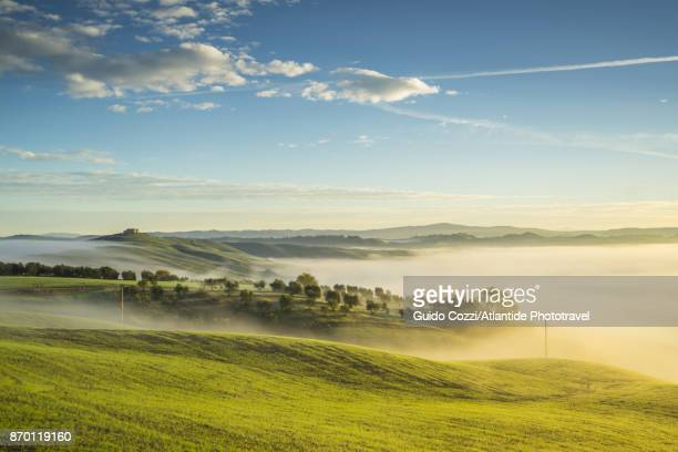 crete senesi - lush stock pictures, royalty-free photos & images