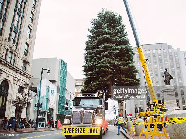 A crew from the Portland Department of Public Works Forestry Division move the 40' Blue Spruce in Monument Square in Portland ME on Thursday November...