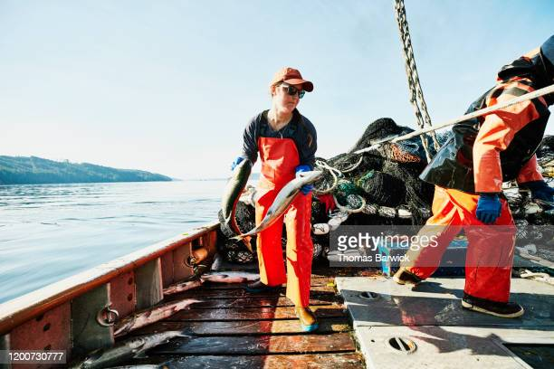 crew members of fishing boat putting salmon in hold after catch - fishing industry stock pictures, royalty-free photos & images