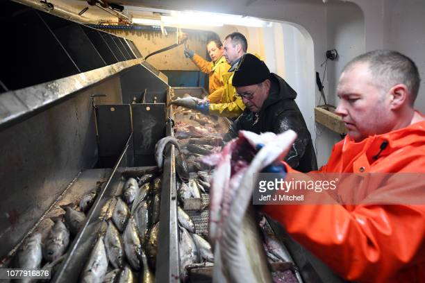 Crew members of the Radiant Star fishing in the North Sea on December 5 2018 in Shetland Scotland The UK fishing industry has been a vocal...