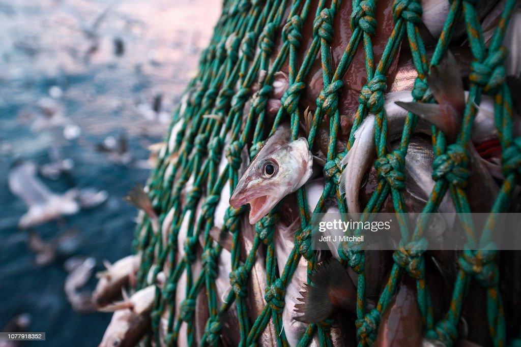 Trawler Fishing Off The Coast Of Shetland : News Photo
