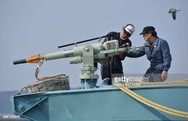 Crew of a whaling ship check a whaling gun or harpoon before departure at Ayukawa port in Ishinomaki City on April 26 2014 A Japanese whaling fleet...