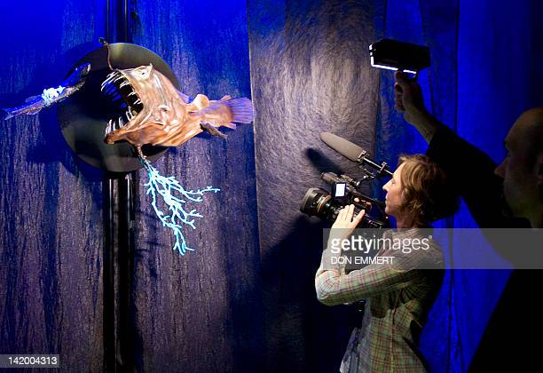TV crew videotapes a preditory fish as part of the Creatures of Light Nature's Bioluminescence exhibit March 27 2012 at the American Museum of...