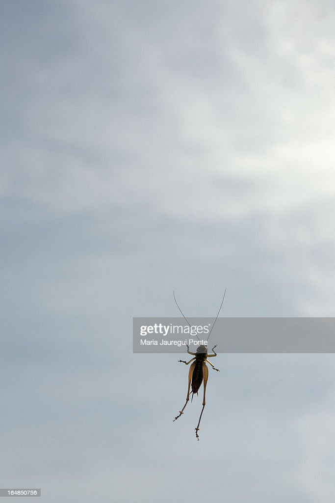 A cricket on a window, low angle view : Stock Photo