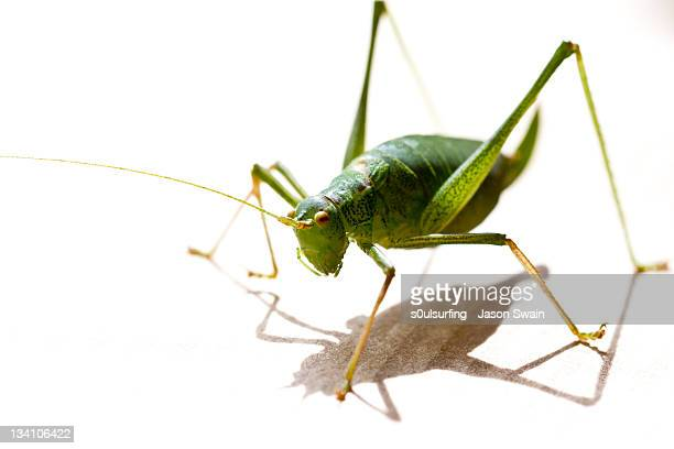 cricket - s0ulsurfing stock pictures, royalty-free photos & images