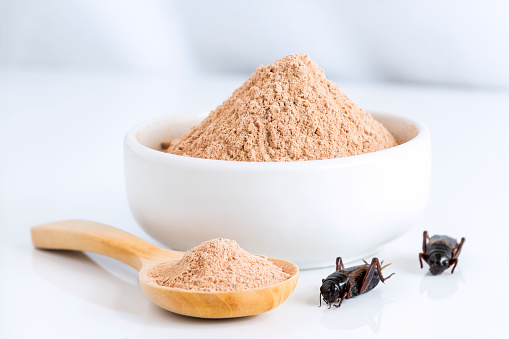 Cricket powder insect for eating as food items made of cooked insect meat in bowl and wood spoon on white background it is good source of protein edible for future. Entomophagy concept. 1084970646