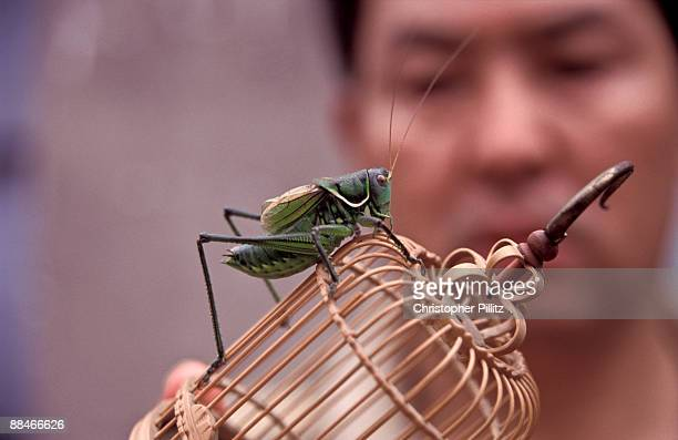 Cricket seller holds up cage with grasshopper