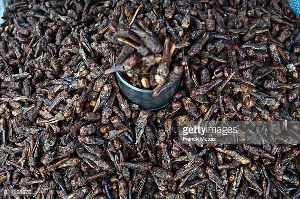 Crickets on sale ( Madagascar)