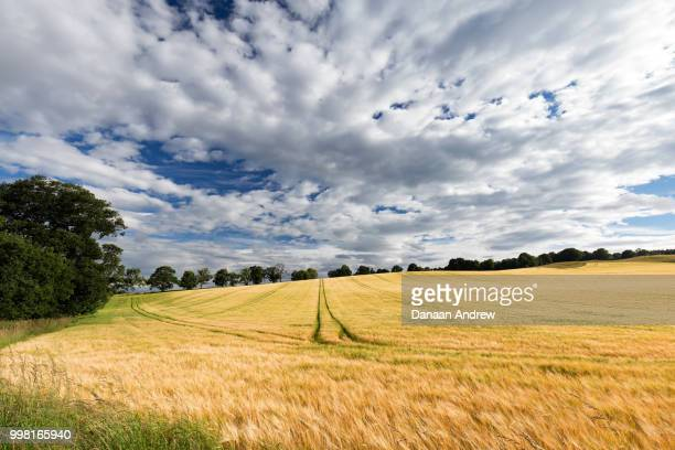 crieff fields - crieff stock pictures, royalty-free photos & images