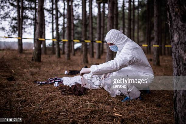 crime scene in the forest - crime stock pictures, royalty-free photos & images