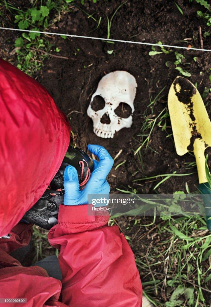 Crime scene investigator photographing disinterred human skull : Stock Photo