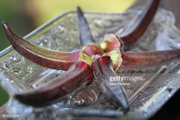 crimson okra -2 - mary moody fotografías e imágenes de stock
