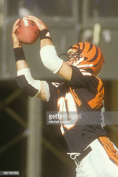 Cris Collinsworth of the Cincinnati Bengals catches a pass during a football game against the Cleveland Browns on October 18 1987 at Riverfront...