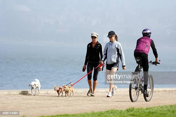 クリッシーフィールド、サンフランシスコ、カリフォルニア州 - named animal ストックフォトと画像