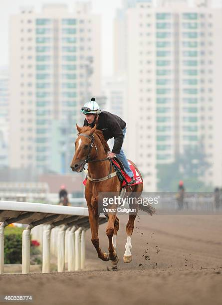 Criterion gallops on the All Weather Track during a trackwork session at Sha Tin Racecourse on December 12, 2014 in Hong Kong, Hong Kong.