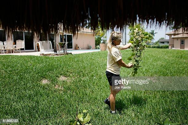 Critter Control specialist Tari Dachton carries foliage to be used for hiding a trap as she tries to capture the Iguanas in the back yard of Gloria...