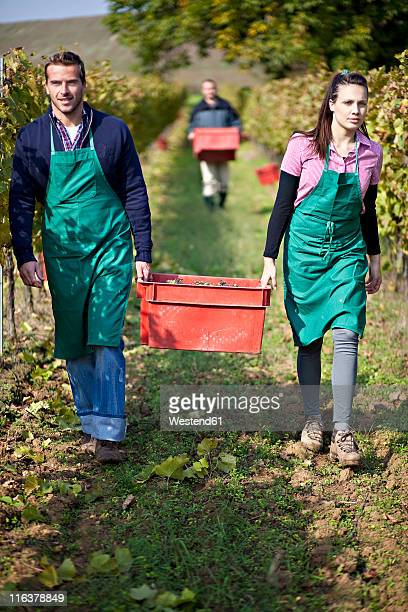 Croatia, Baranja, Men and woman carrying fresh grapes in container