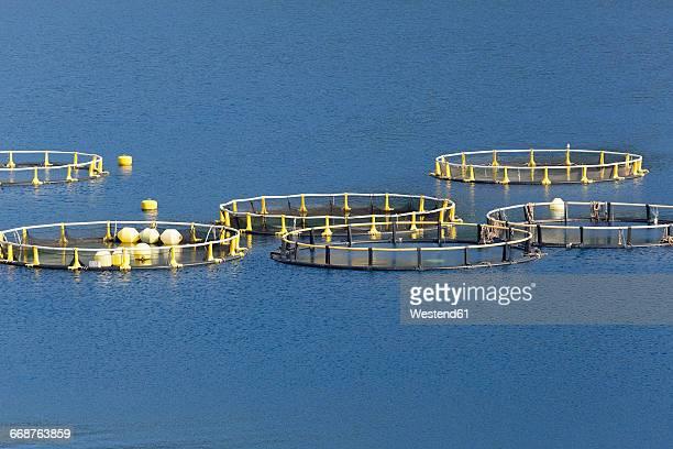 Croatia, Dalmatia, Dubrovnik-Neretva, fish farm