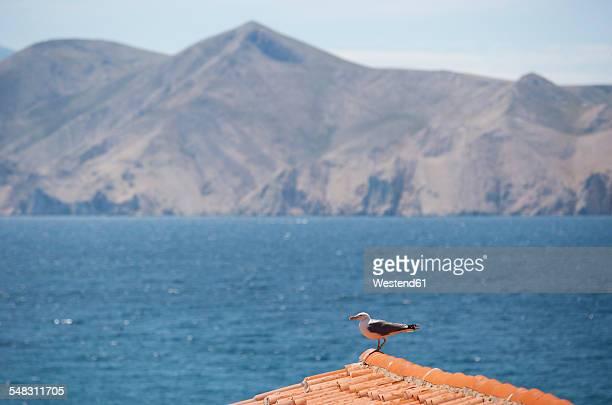 Croatia, Kvarner Gulf, Baska, seagull on rooftop
