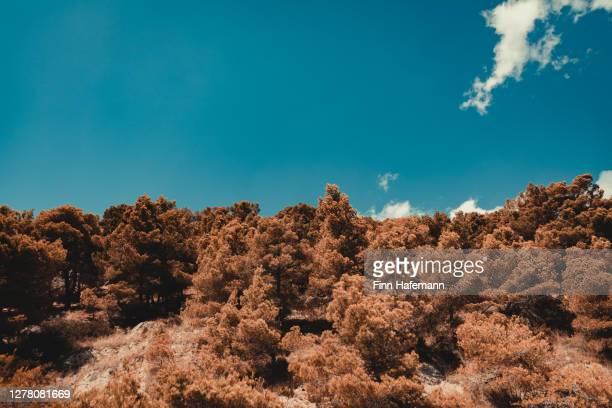 croatia mediterranean hills under blue summer skyscape edited - toned colors - dalmatia region croatia stock pictures, royalty-free photos & images