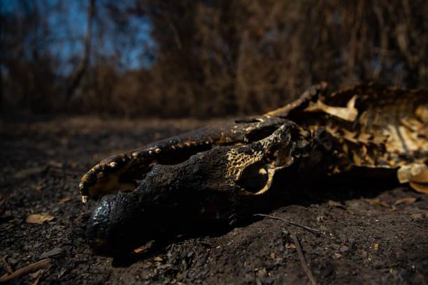 BRA: Fires Ravage the Pantanal