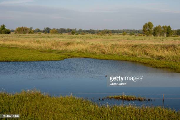 PRISON LOUISIANA OCTOBER A crocodile in a pond at the Angola Prison Much of the outlying land surrounding Angola prison is swamp land infested by...
