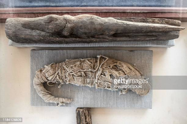 A crocodile mummy is displayed after the announcement of a new discovery carried out by an Egyptian archaeological team in Giza's Saqqara necropolis...
