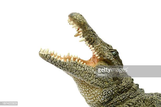 crocodile showing jaws - crocodile stock pictures, royalty-free photos & images