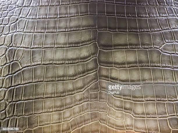 Crocodile Skin Leather Texture
